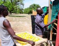 Séchage solaire des mangues et autres fruits (Mali)