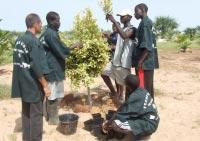 Production de légumes bio à l'école de Kaydara (Sénégal)